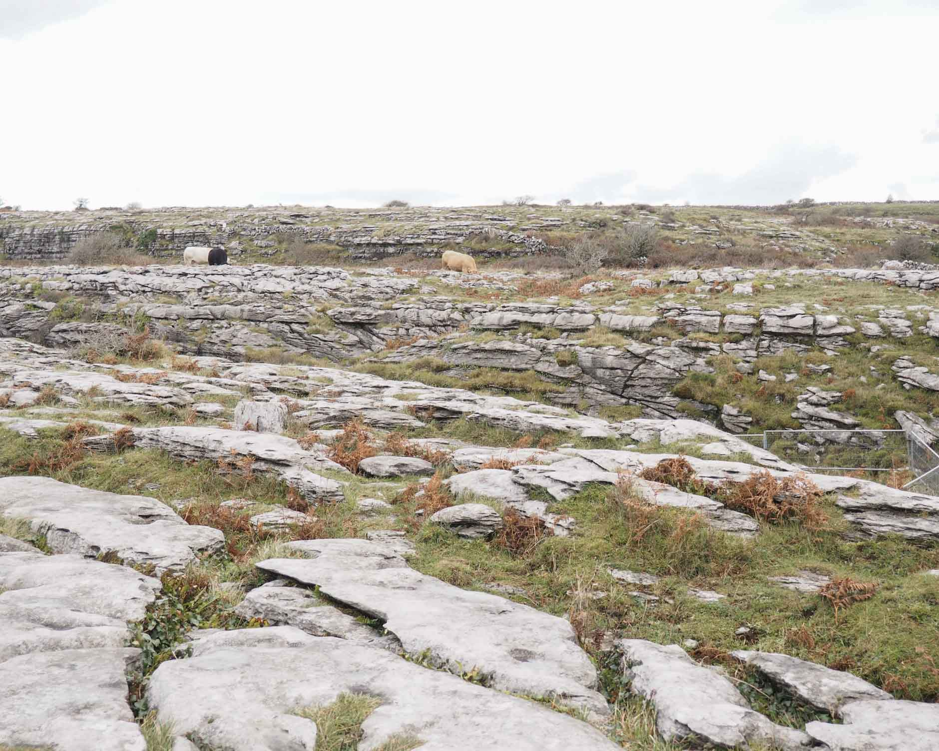 naty michele solo travel in ireland the burren